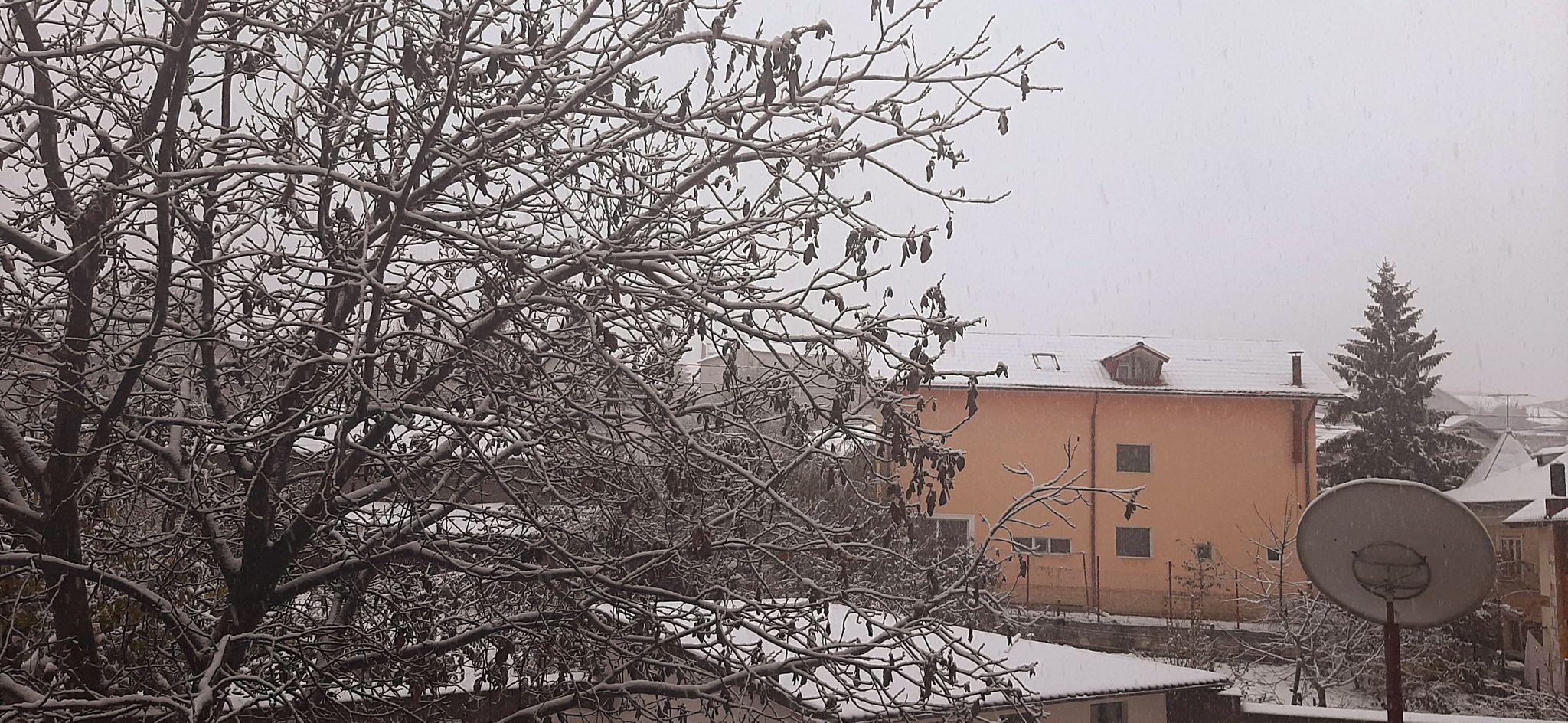 Ninge ca în povești la Tulcea.
