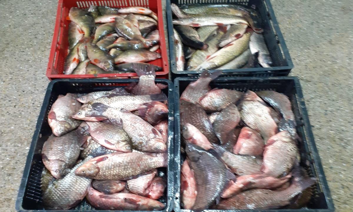 Peşte, icre negre și plase de pescuit, confiscate de polițiștii de frontieră din cadrul Gărzii de Coastă