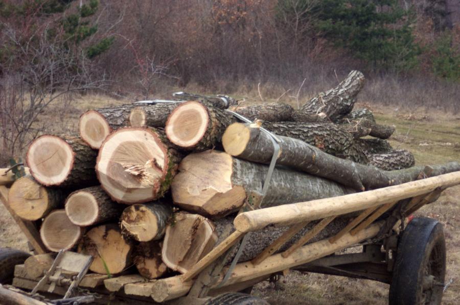 Hoți de lemne prinși de polițiști