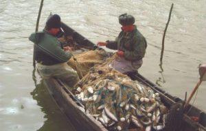 10 decembrie, data limită pentru vizarea Permiselor de Pescuit Comercial