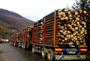 Ilegalităţi în domeniul silvic – percheziţii și în judeţul Tulcea