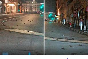 Mii de păsări au murit din cauza focurilor de artificii