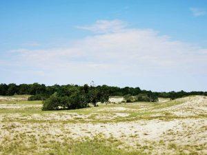 11  ianuarie – Ziua Mondială a Rezervațiilor și Parcurilor Naturale – prima zi în calendarul ecologic al anului