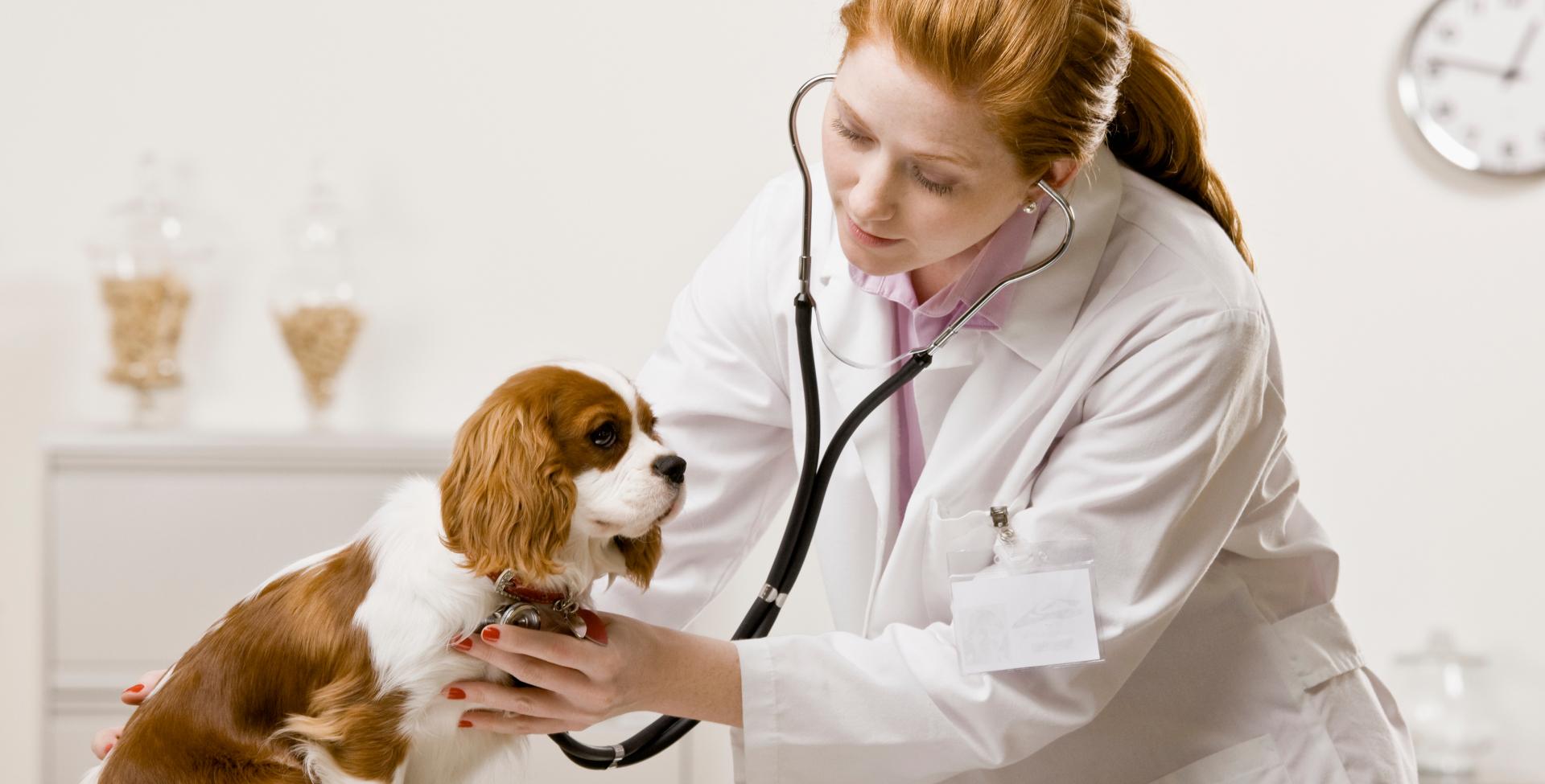 În curând, nu vei mai putea să dai medicamente animalelor fără implicarea veterinarului