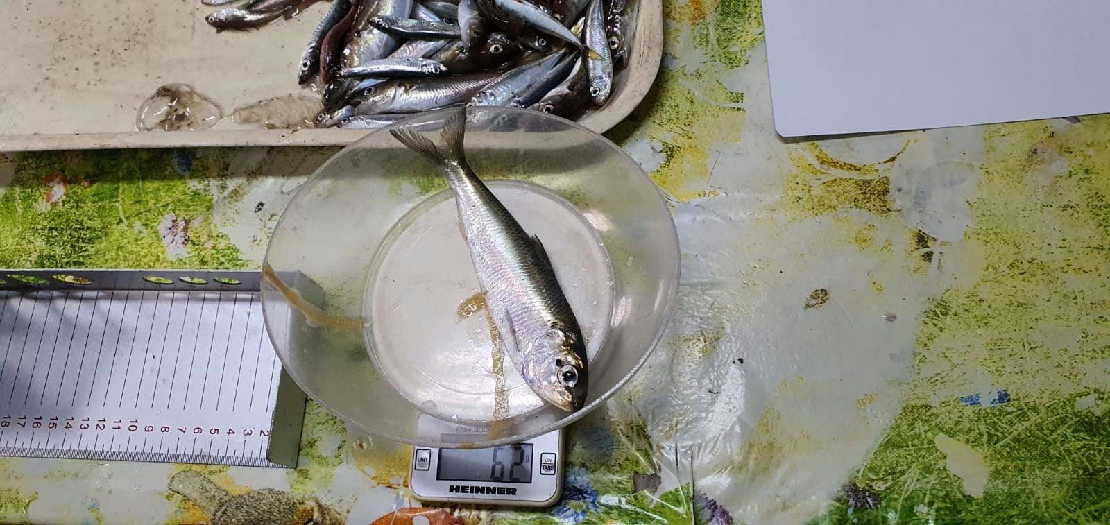"""Specialiștii Institutului Național """"Grigore Antipa"""" la """"pescuit științific"""" în Deltă"""