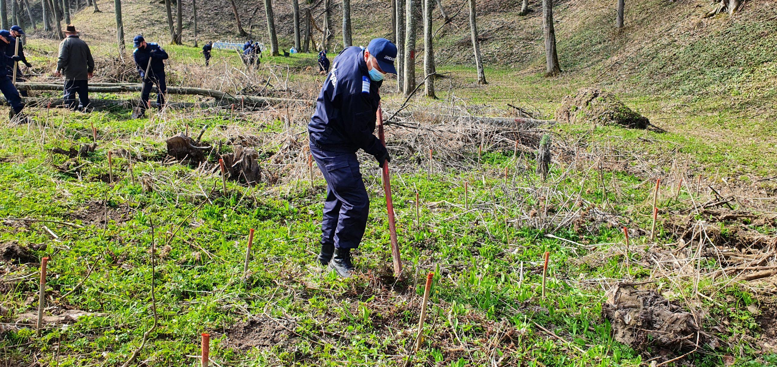 171 de copaci plantați pentru cei 171 de ani ai Jandarmeriei  Române