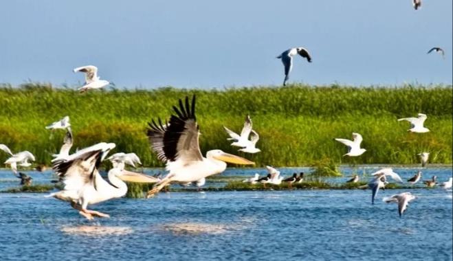 Azi este Ziua Internațională a Păsărilor