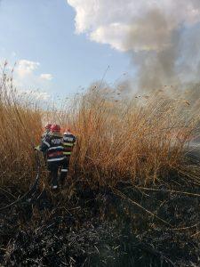 Cinci hectare de stuf au ars în această după-amiază