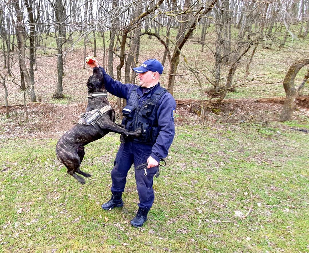 Jandarmii tulceni vor avea un nou coleg – câinele de serviciu, Nero