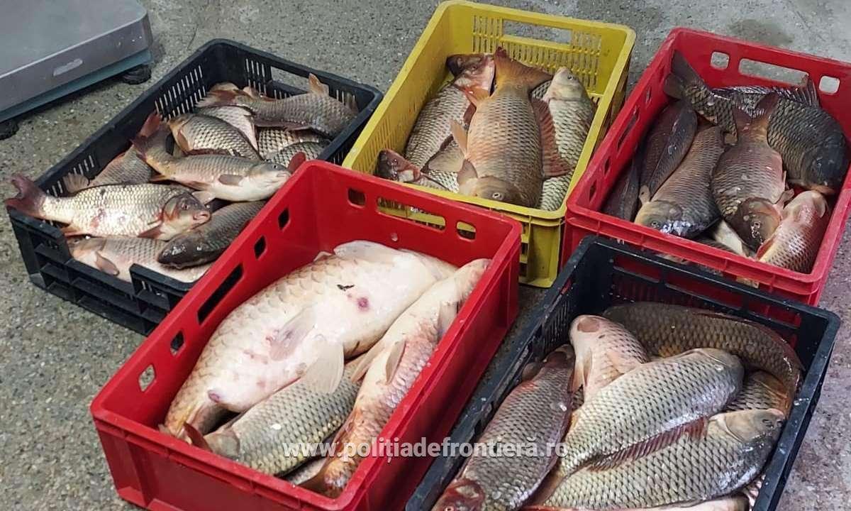 Braconaj piscicol în perioada de prohibiție