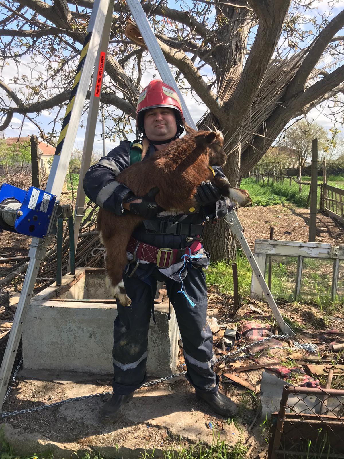 Ied salvat de pompierii tulceni
