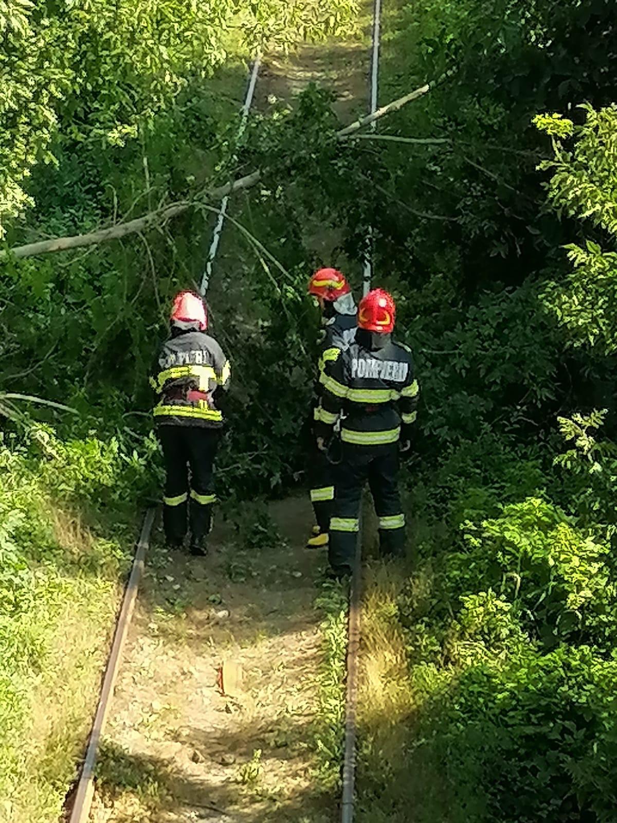 Circulația trenurilor blocată din cauza unui copac