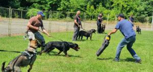 Câinii de serviciu sunt patrupezii specializați ai forțelor de ordine