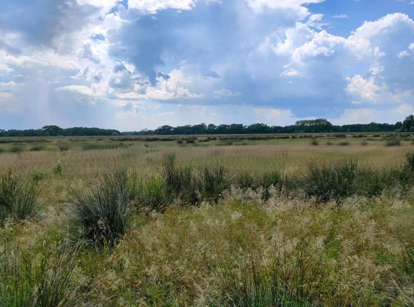 Pădurile Letea și Caraorman au regim special în Delta Dunării