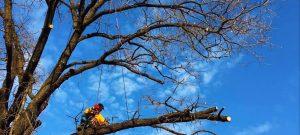 Toaletarea copacilor în sezonul cald nu este indicată