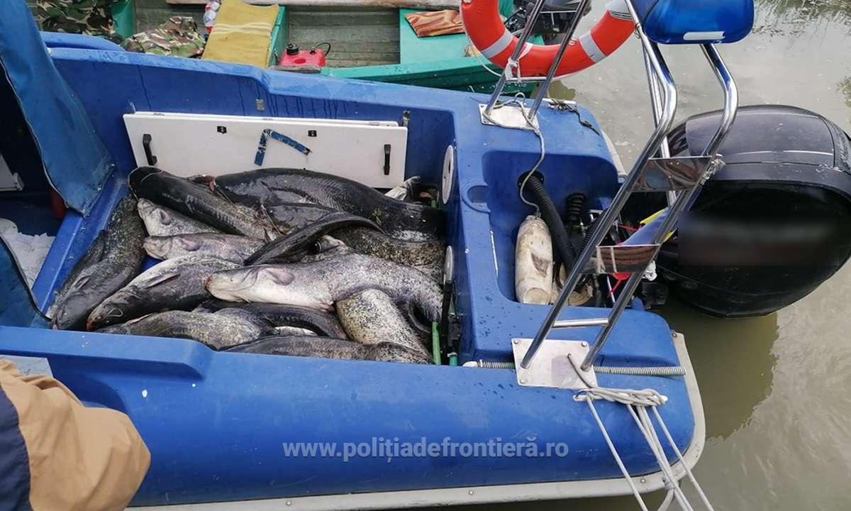 Peste 174 kilograme de pește,depistate de polițiștii de frontieră tulceni