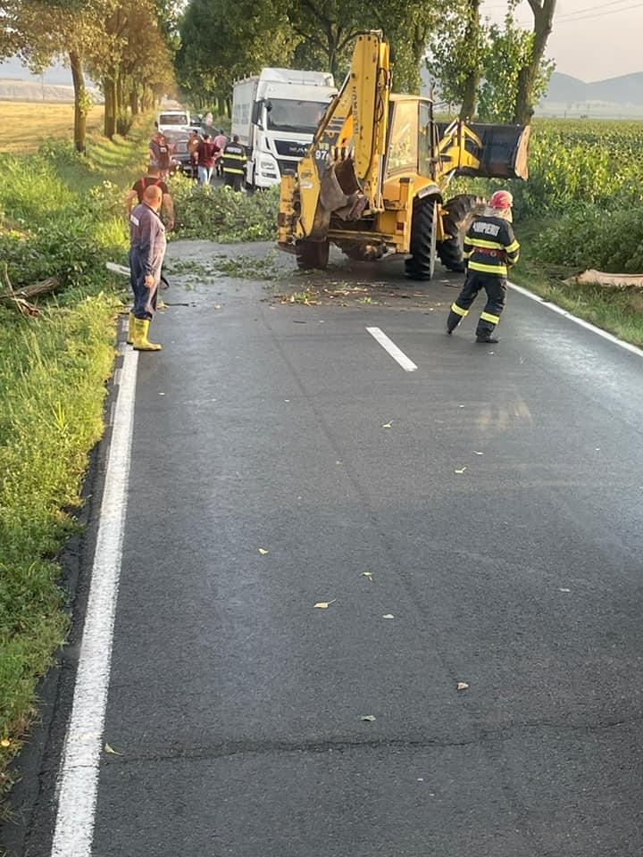 DJ222 Sarichioi-Enisala blocat de copaci doborâți de furtună!