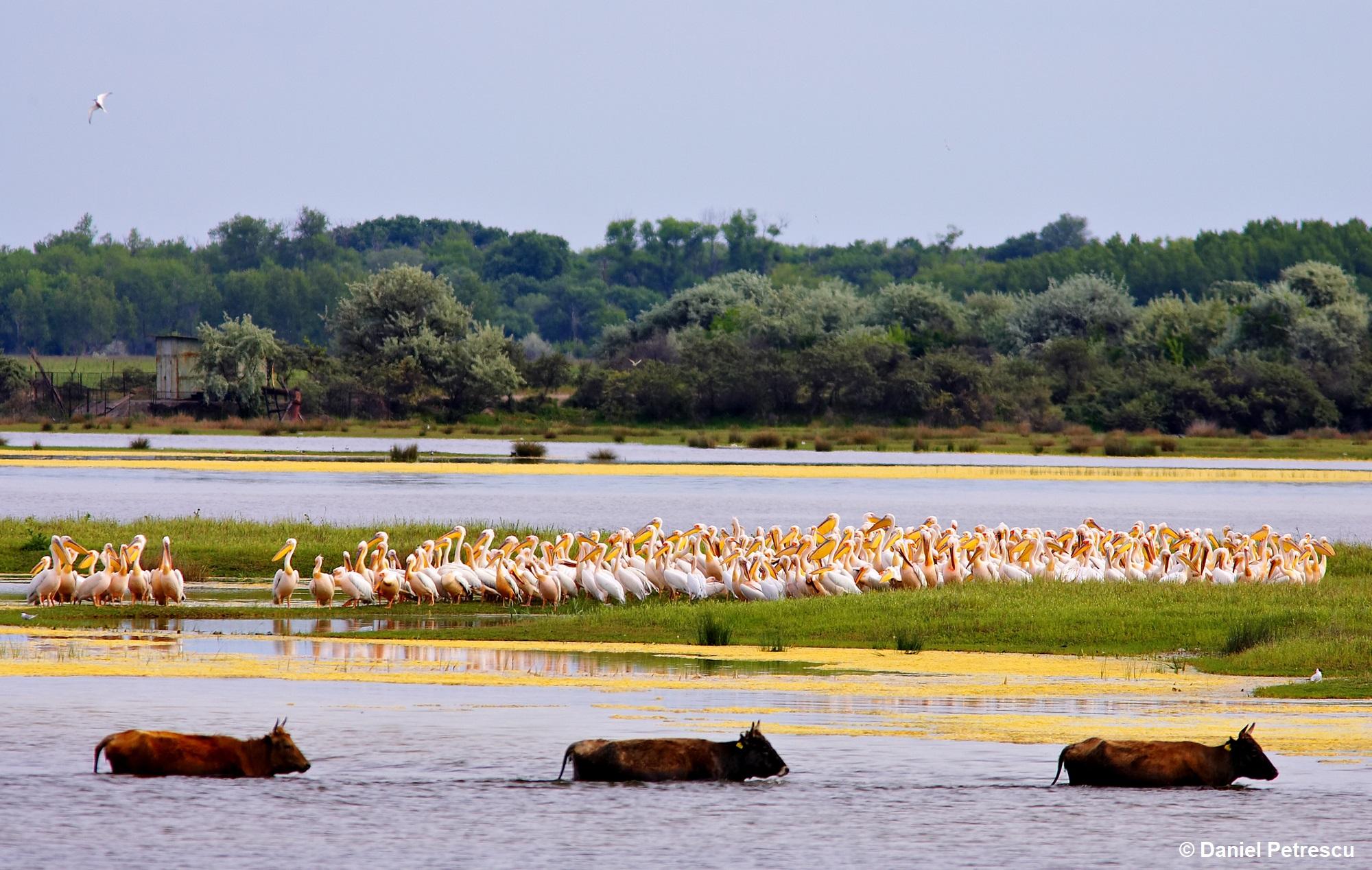 Tururi ornitologice gratuite, în schimbul pet-urilor din Deltă