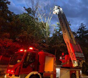 Intervenție de urgență a pompierilor, poliției și operatorului de salubritate din Tulcea pentru degajarea unei crengi periculoase