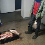 Braconier depistat pe Lacul Erenciuc cu 800 metri de setci și zeci de kilograme de pește