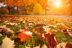 """Prognoza ANM pentru octombrie: Se pot înregistra şi temperaturi """"estivale"""" de 38 de grade Celsius"""